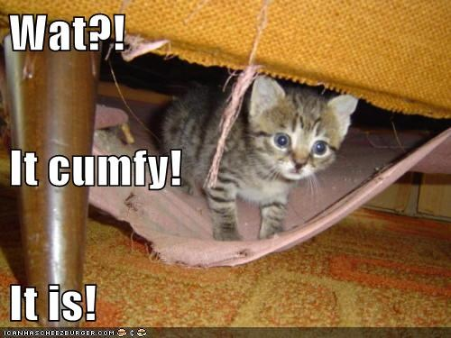 Wat?!  It cumfy! It is!