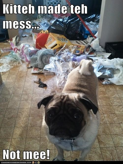 Kitteh made teh mess...  Not mee!