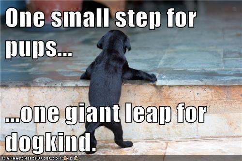 One small step for pups...  ...one giant leap for dogkind.