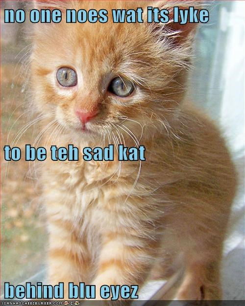 no one noes wat its lyke to be teh sad kat behind blu eyez
