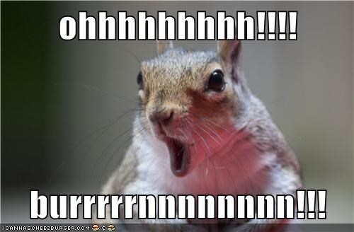 animals,best of the week,burn,come back,Hall of Fame,open mouth,shocked,squirrel,whoa