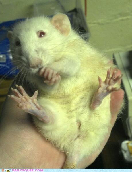 bath,do want,docile,no1curr,noms,pretty,rat,reader squees,sitting,treat,tummy