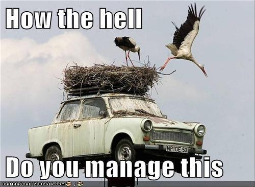 animals,birds,car,crane,cranes,nest