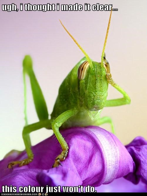 bug,Flower,grasshopper,insect,no,not good,purple,wont-do