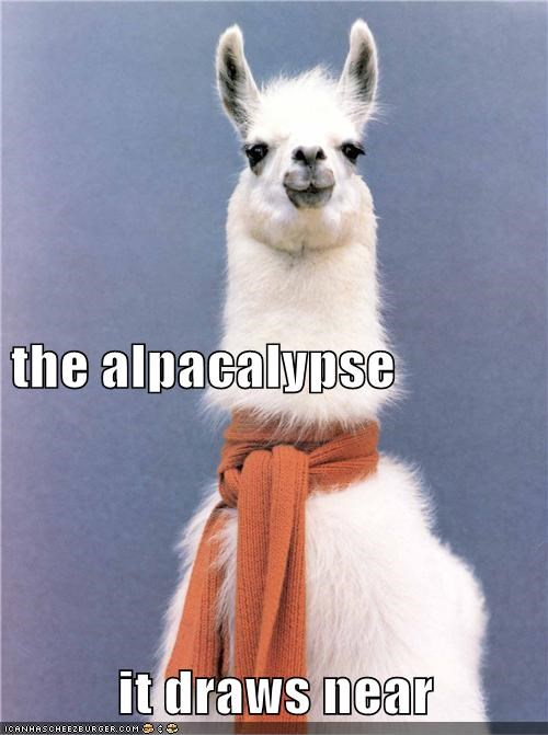 the alpacalypse it draws near
