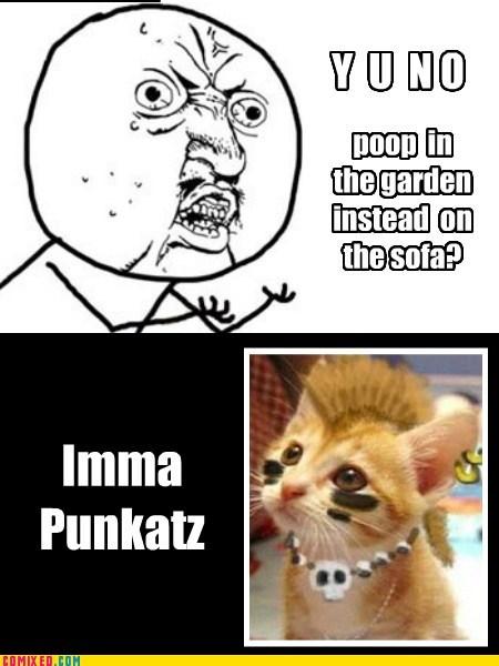 Punk Pet