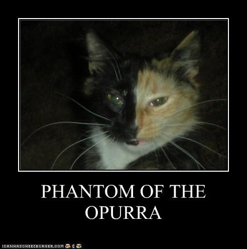 caption,captioned,cat,coloration,coloring,mask,musical,opera,Phantom,phantom of the opera,pun,purr