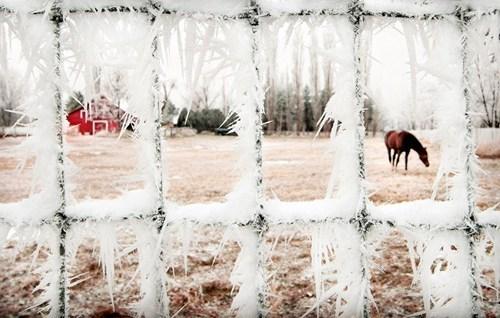 barn,farm,frost,getaways,Hall of Fame,horse,ice,serene,washington,Washington state,white,winter