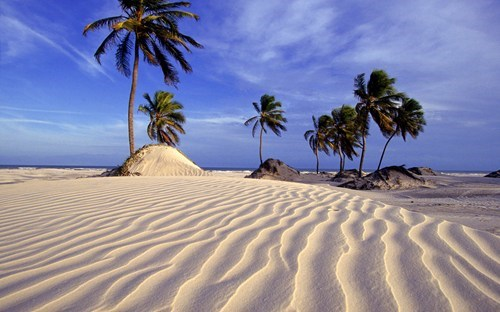 beach,brazil,getaways,palm trees,sand,south america,vacation,white sand