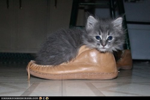 comfort is relative,cyoot kitteh of teh day,moccasin,shoe,shoes