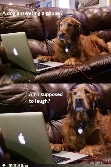 animals,computer,dogs,golden retriever,headphones,hello yes this is dog,i-dont-get-it,idgi,laptop,phone,telephone,yes this is dog