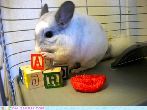 Reader Squees: The Literate Chinchilla