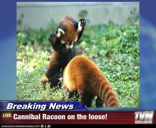 Breaking News - Cannibal Racoon on the loose!