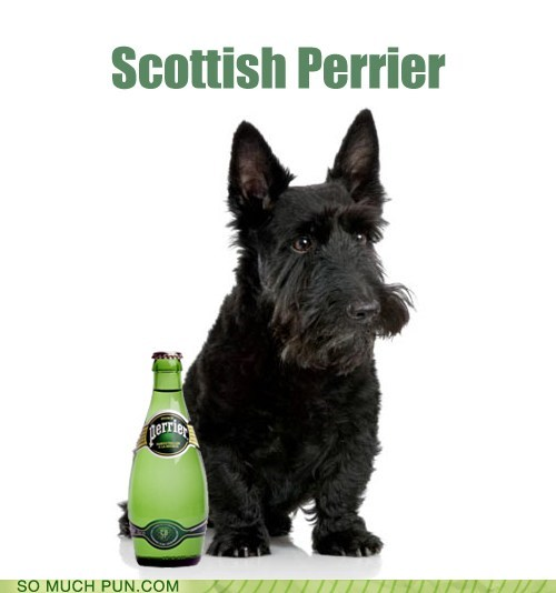 comparison,dogs,fancy,literalism,mineral water,perrier,scottish terrier,side by side,similarly spelled,terrier,water