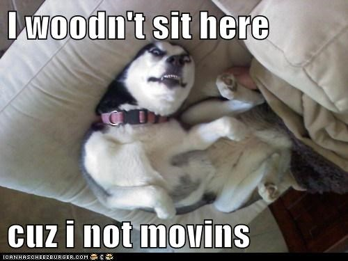 I woodn't sit here  cuz i not movins