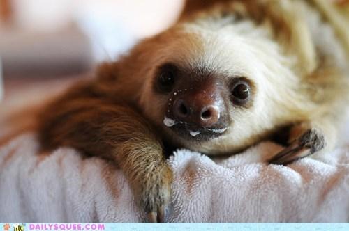 adorable,baby,happy,milk,mustache,noms,sloth,squee spree