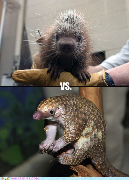 Squee Spree: Coendous Vs. Pangolins!