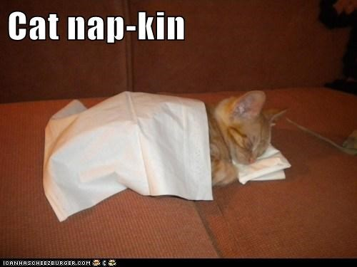 Cat nap-kin
