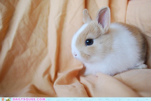 Little Bunny Blue Eyes