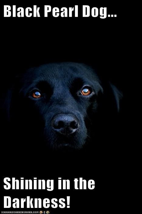 Black Pearl Dog...  Shining in the Darkness!
