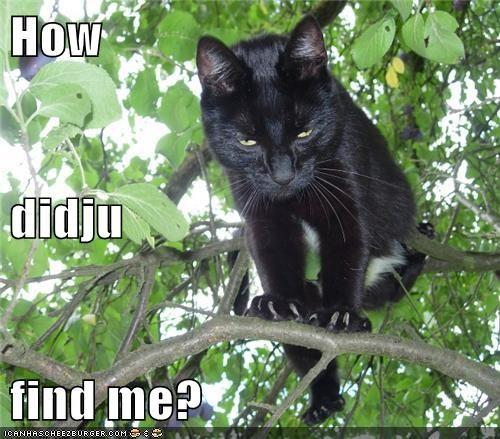 How didju find me?