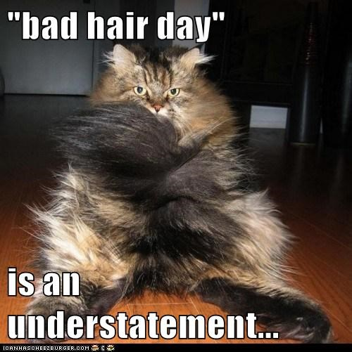"""bad hair day""  is an understatement..."