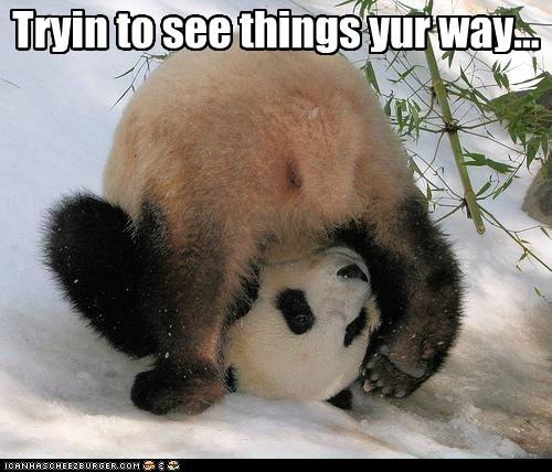 animals,panda,panda bear,point of view,upside down