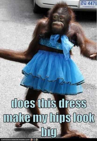 animals,ape,clothing,does this make me look fat,fashion,im-fabulous,orangutan