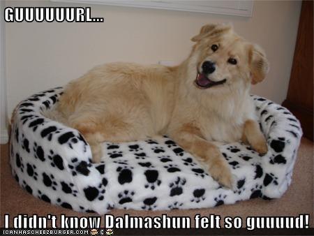GUUUUUURL...  I didn't know Dalmashun felt so guuuud!