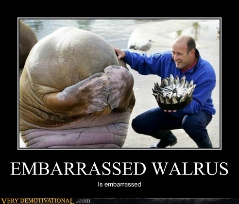 EMBARRASSED WALRUS