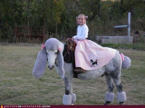 best of week,horse,humiliation,poodle skirt,wtf