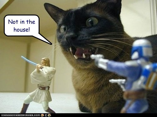 action figures,bounty hunter,caption,captioned,cat,fighting,house,in,Jedi,not,shouting,siamese,star wars