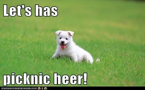 grass,happy,happy dog,outdoors,picnic,puppy,samoyed,tongue,tongue out