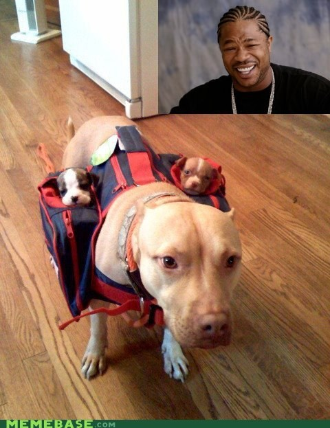 dogs,saddlebags,Xzibit,yo dawg