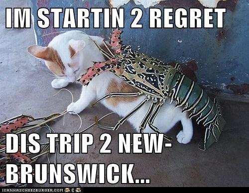 caption,captioned,cat,lobster,lolwut,new brunswick,regret,starting,trip