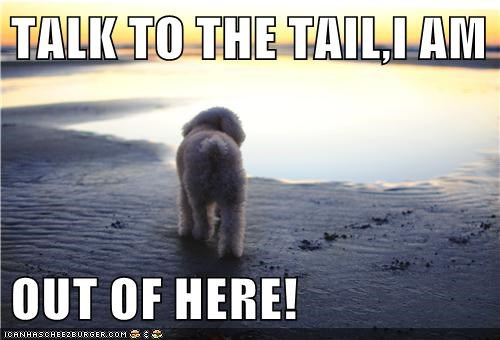 TALK TO THE TAIL,I AM   OUT OF HERE!