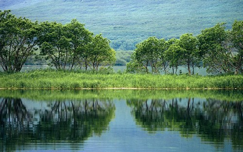 Wallpaper of the Day: Trees on the Kamchatka Pennisula, Russia