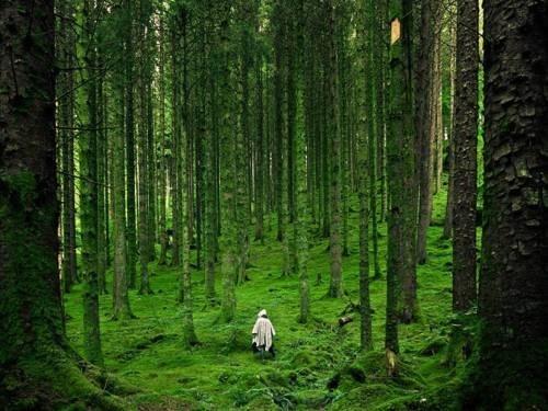 britain,getaways,green,highlands,hike,hiker,scotland,scottish highlands,trees,UK
