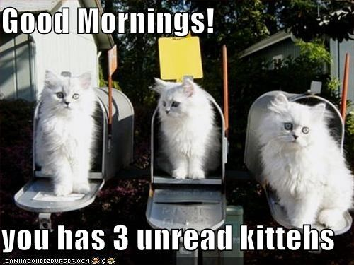 Good Mornings!  you has 3 unread kittehs