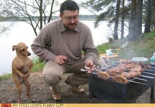 bbq,chicken,dogs,patient,stand,wait