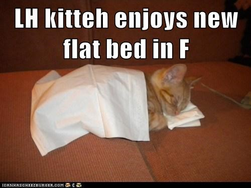 LH kitteh enjoys new flat bed in F