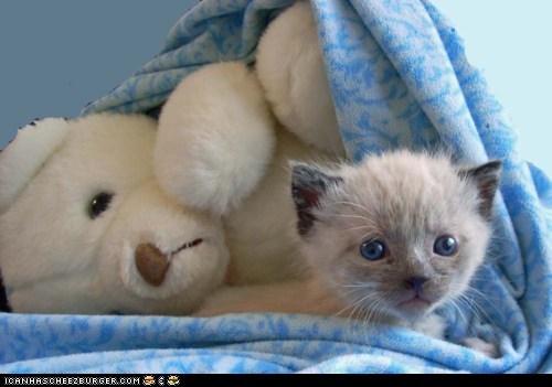 Cyoot Kitteh of teh Day: Still Life With Kitten and Stuffed Polar Bear