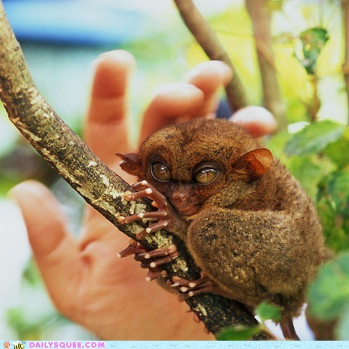 Creepicute: Menacing Tarsier is Menacing