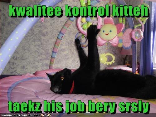 kwalitee kontrol kitteh  taekz his job bery srsly