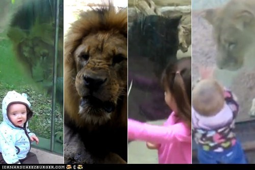 Around the Interwebs: 10 Videos of Kids Facing Off Against Zoo Animals