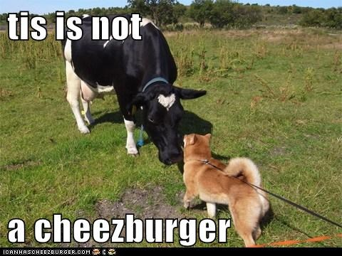 tis is not  a cheezburger