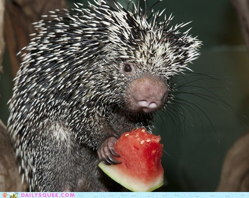 Squee Spree: Watermelon Nom Time