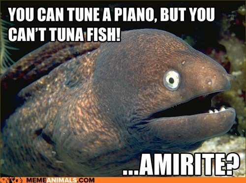 amirite,Bad Joke Eel,eels,jokes,lame,piano,puns,tuna,tuna fish,tune