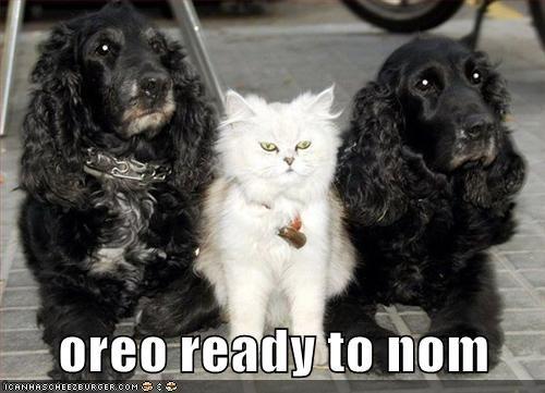 oreo ready to nom