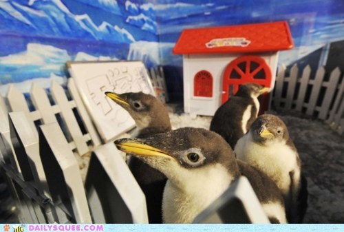 acting like animals,blueprint,confused,construction,drawing,fence,house,penguin,penguins